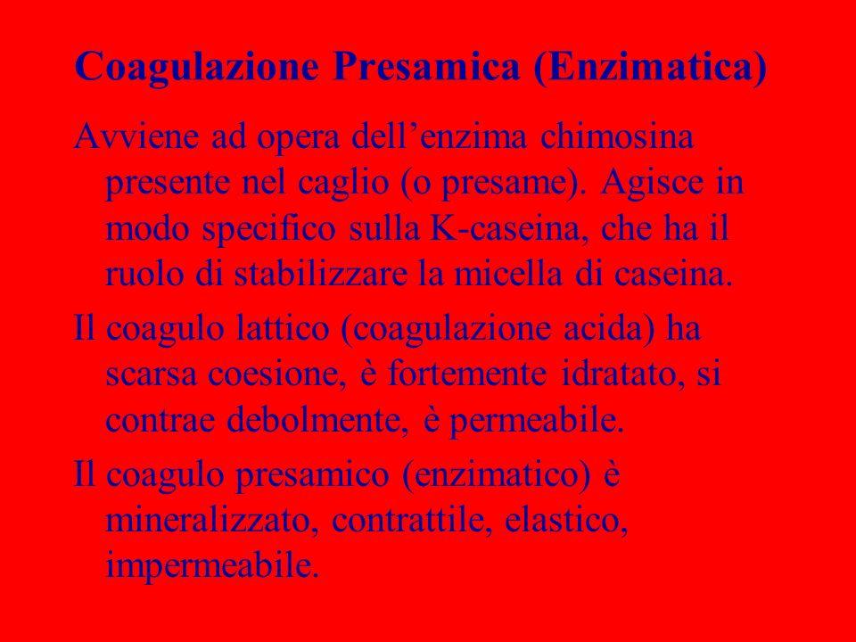 Coagulazione Presamica (Enzimatica)