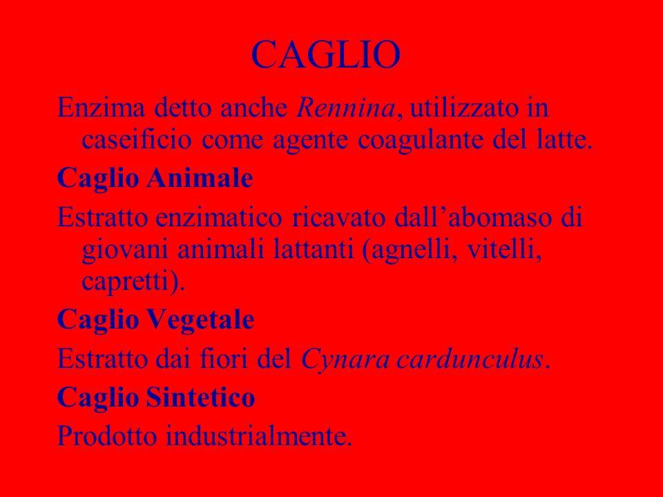 CAGLIO Enzima detto anche Rennina, utilizzato in caseificio come agente coagulante del latte. Caglio Animale.