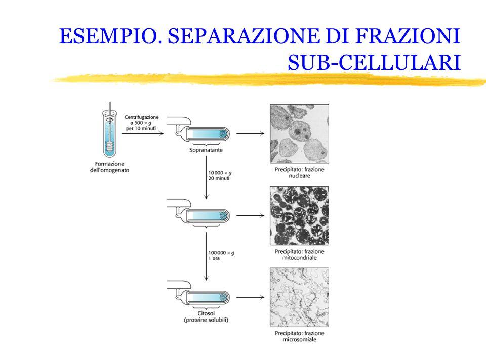ESEMPIO. SEPARAZIONE DI FRAZIONI SUB-CELLULARI