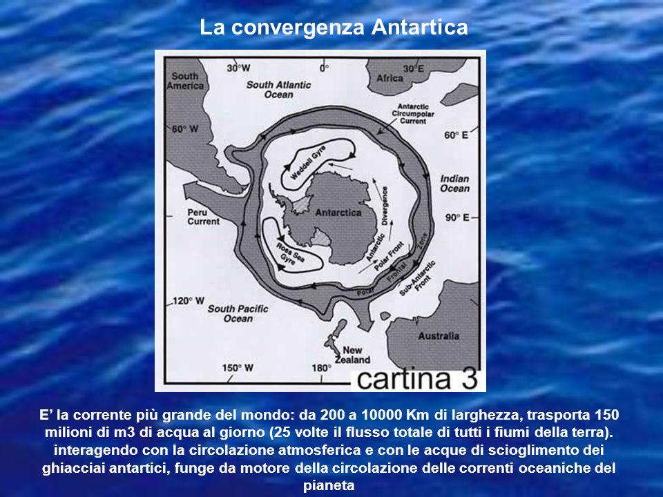 La convergenza Antartica