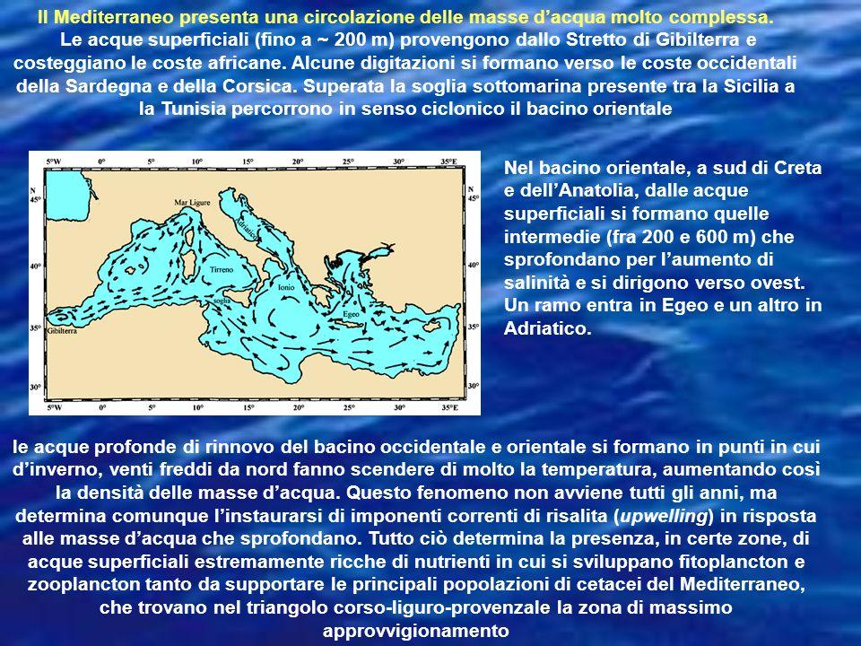 Il Mediterraneo presenta una circolazione delle masse d'acqua molto complessa.