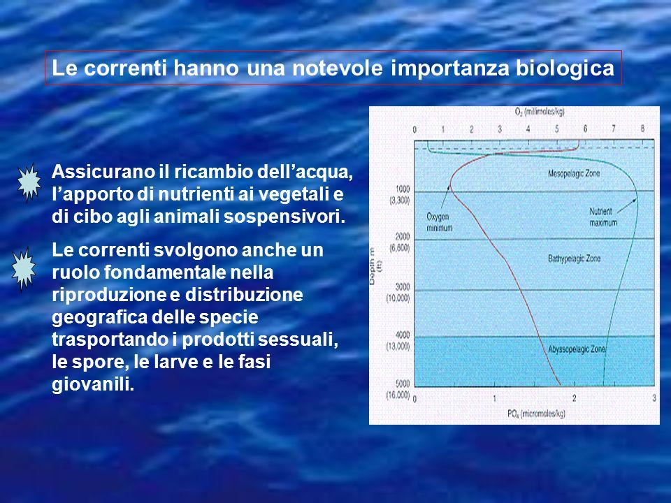 Le correnti hanno una notevole importanza biologica