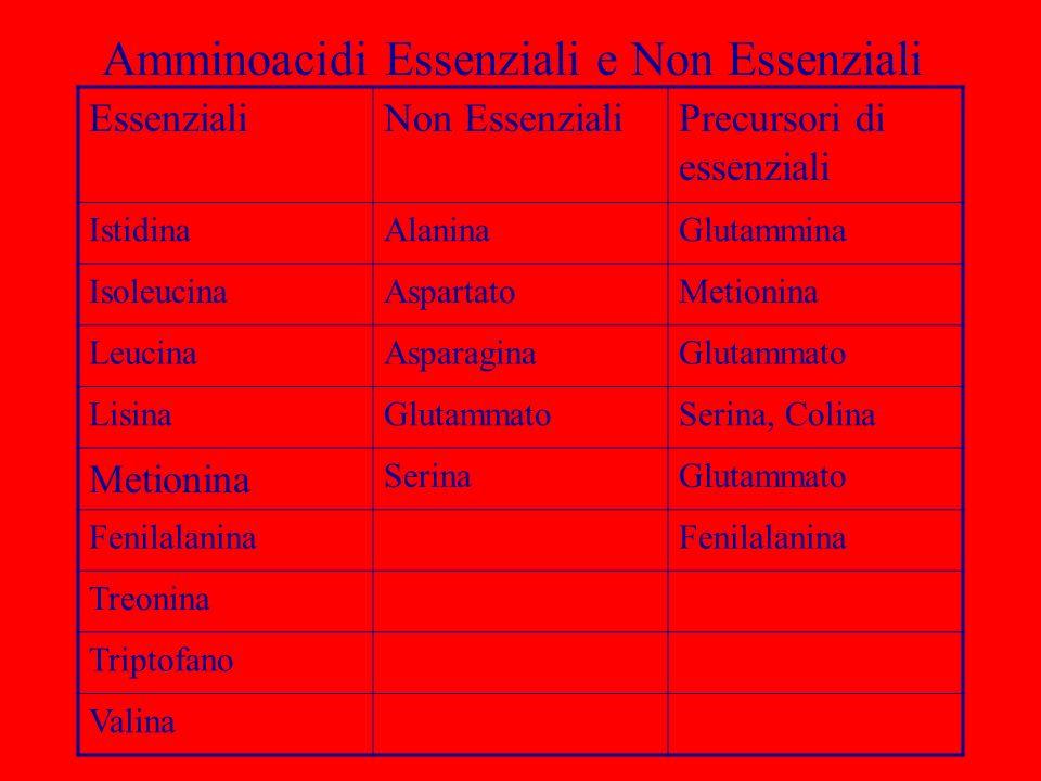 Amminoacidi Essenziali e Non Essenziali