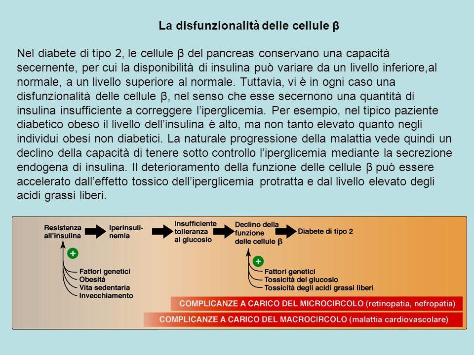 La disfunzionalità delle cellule β