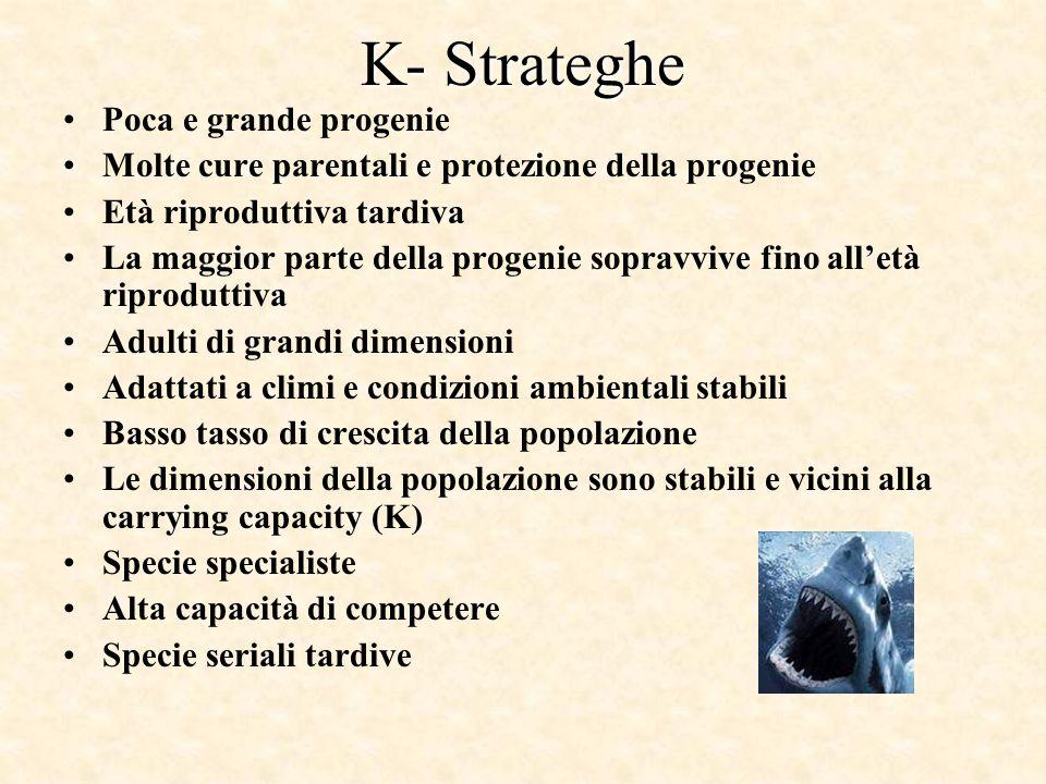 K- Strateghe Poca e grande progenie