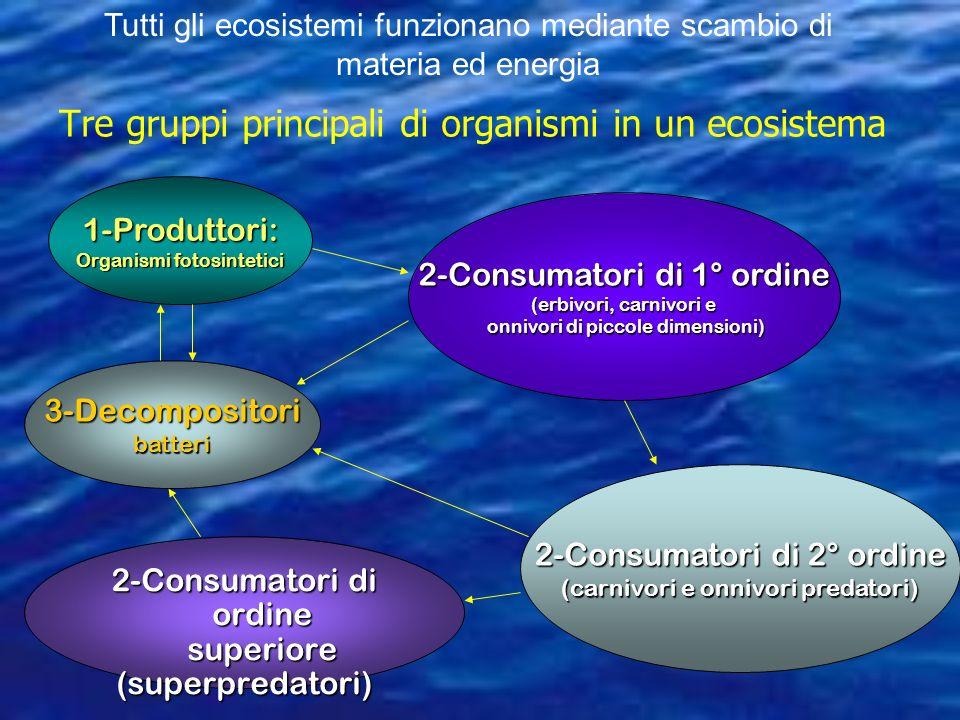 Tre gruppi principali di organismi in un ecosistema