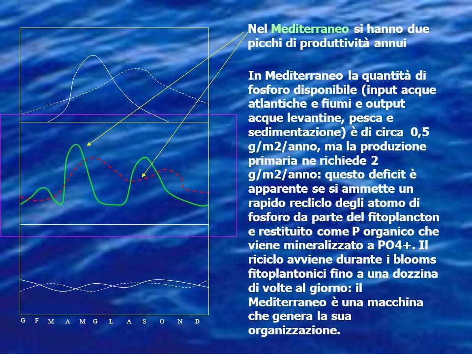 Nel Mediterraneo si hanno due picchi di produttività annui