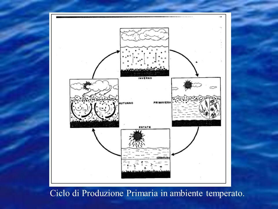 Ciclo di Produzione Primaria in ambiente temperato.