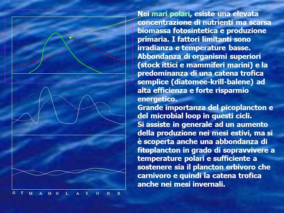 Nei mari polari, esiste una elevata concentrazione di nutrienti ma scarsa biomassa fotosintetica e produzione primaria. I fattori limitanti sono irradianza e temperature basse.