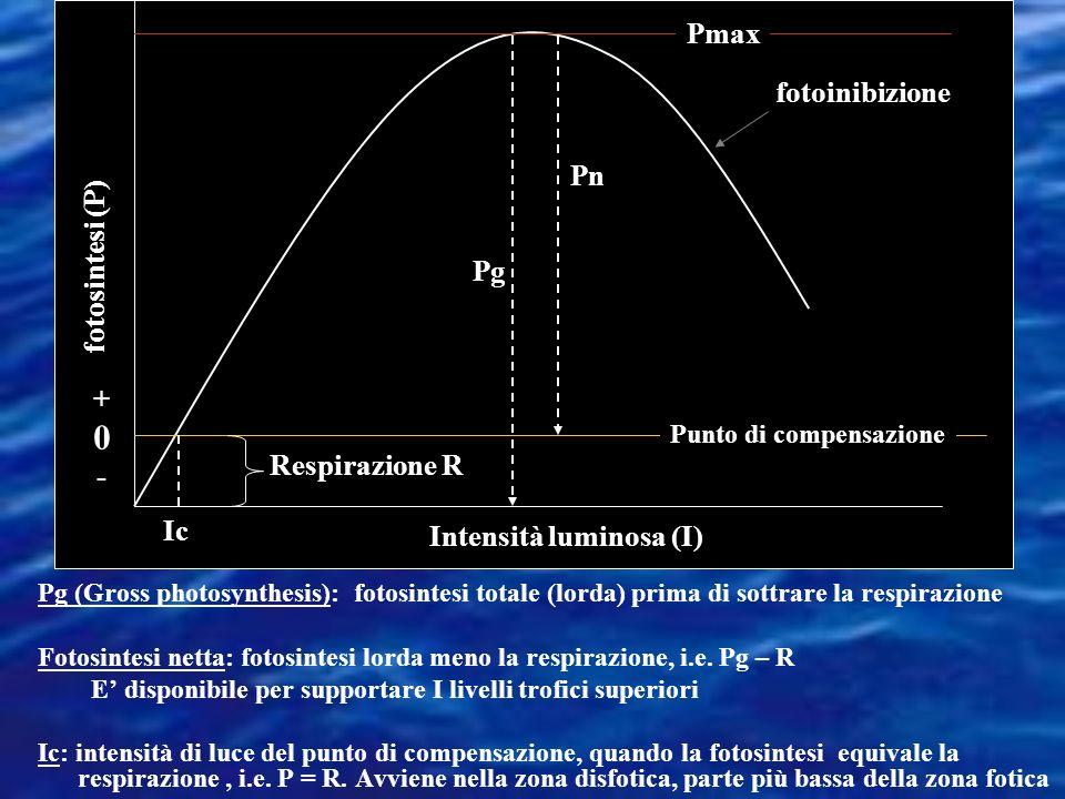 Intensità luminosa (I) fotosintesi (P)