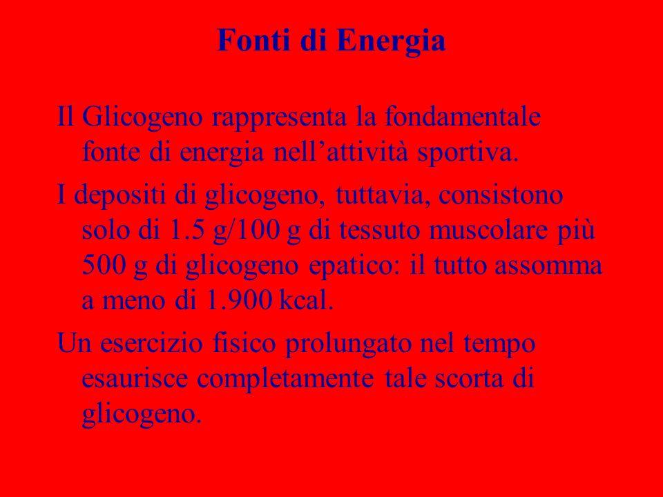 Fonti di Energia Il Glicogeno rappresenta la fondamentale fonte di energia nell'attività sportiva.