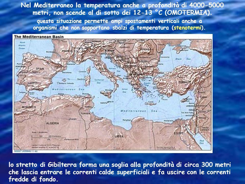 Nel Mediterraneo la temperatura anche a profondità di 4000-5000 metri, non scende al di sotto dei 12-13 °C (OMOTERMIA).