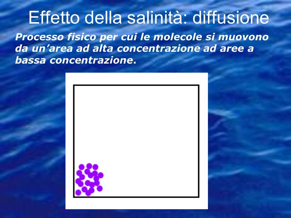 Effetto della salinità: diffusione