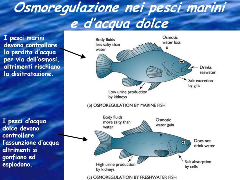 Osmoregulazione nei pesci marini e d'acqua dolce