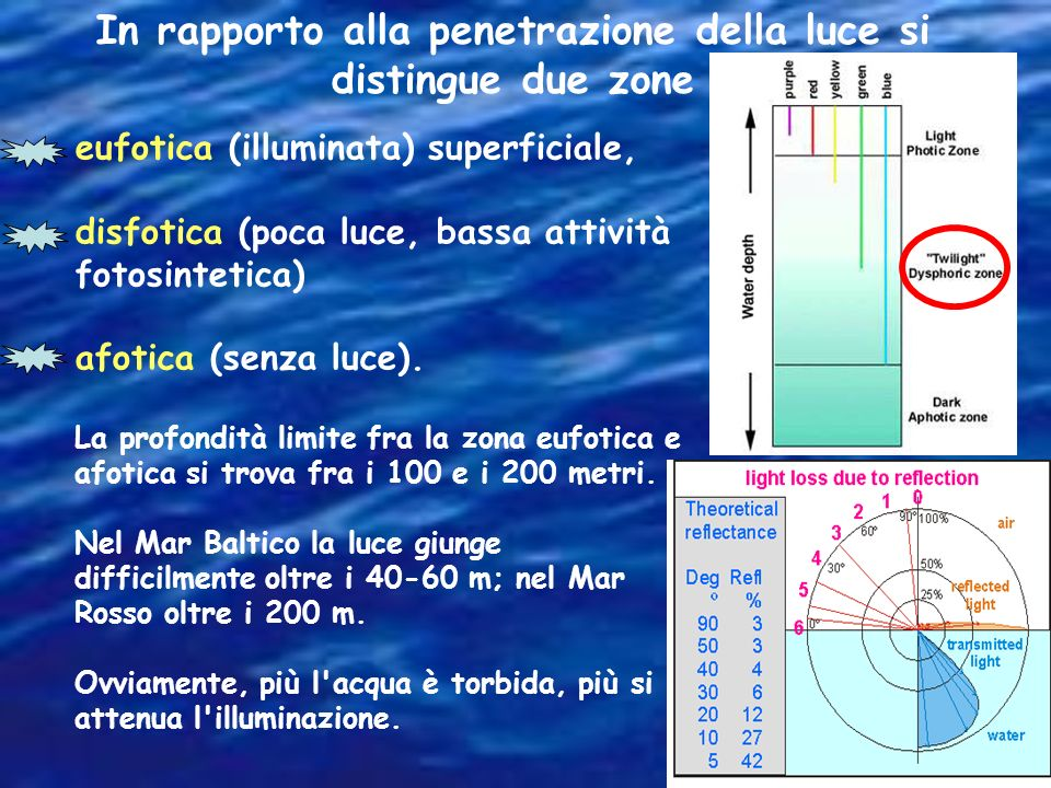 In rapporto alla penetrazione della luce si distingue due zone