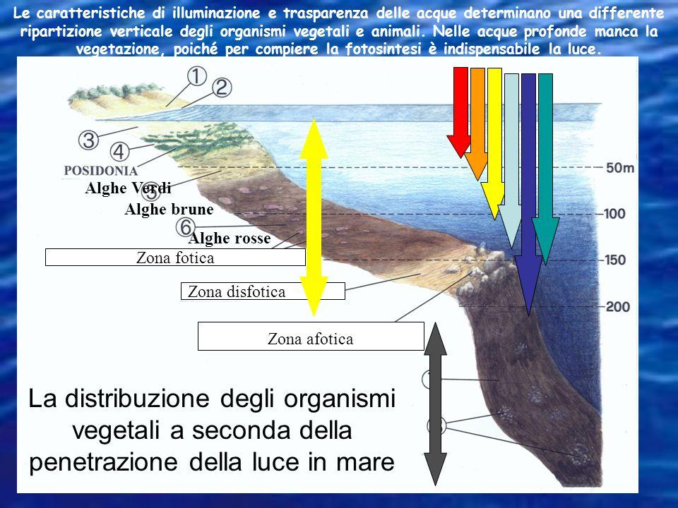 Le caratteristiche di illuminazione e trasparenza delle acque determinano una differente ripartizione verticale degli organismi vegetali e animali. Nelle acque profonde manca la vegetazione, poiché per compiere la fotosintesi è indispensabile la luce.