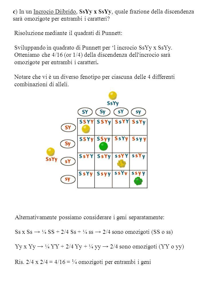 c) In un Incrocio Diibrido, SsYy x SsYy, quale frazione della discendenza sarà omozigote per entrambi i caratteri