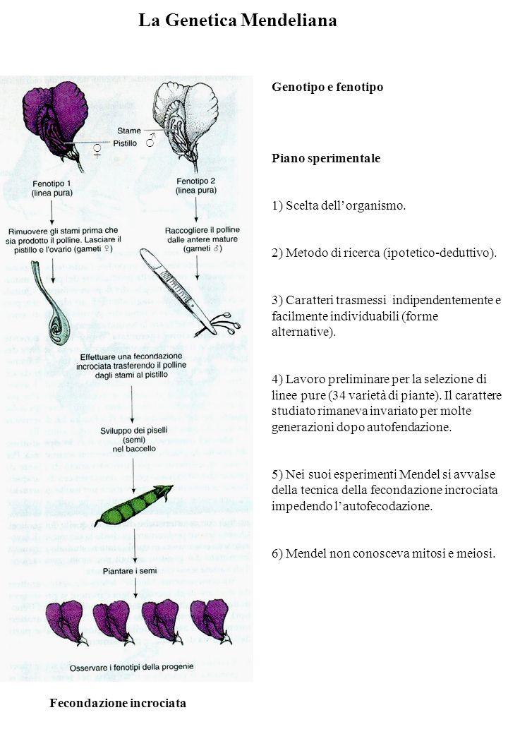 La Genetica Mendeliana