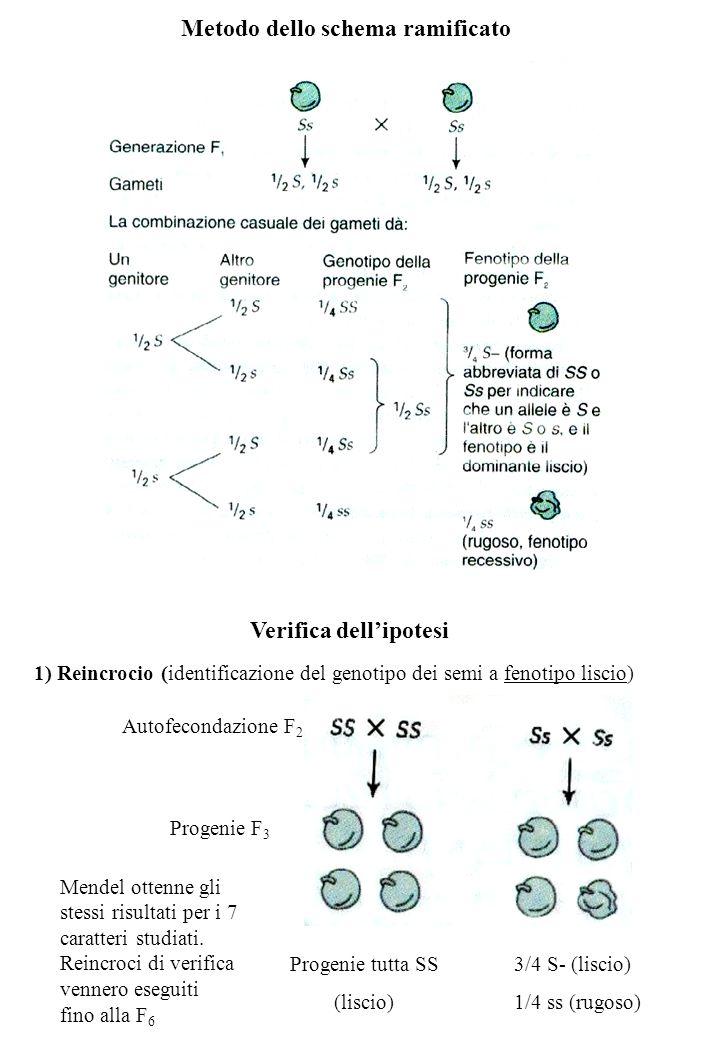 Metodo dello schema ramificato