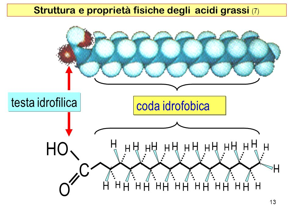 Struttura e proprietà fisiche degli acidi grassi (7)