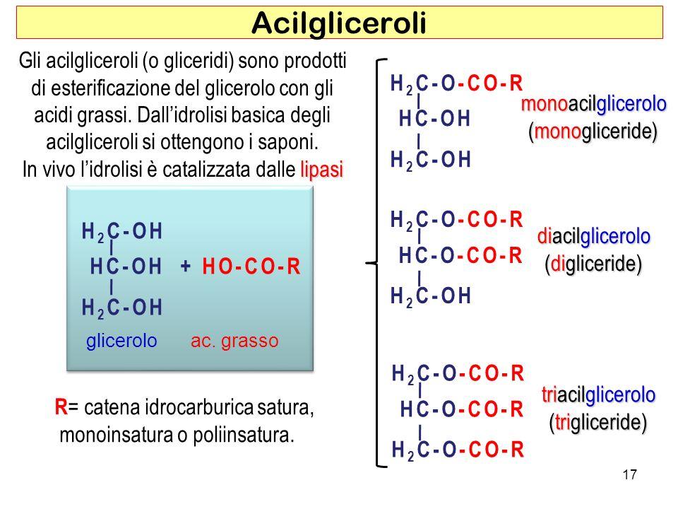 In vivo l'idrolisi è catalizzata dalle lipasi