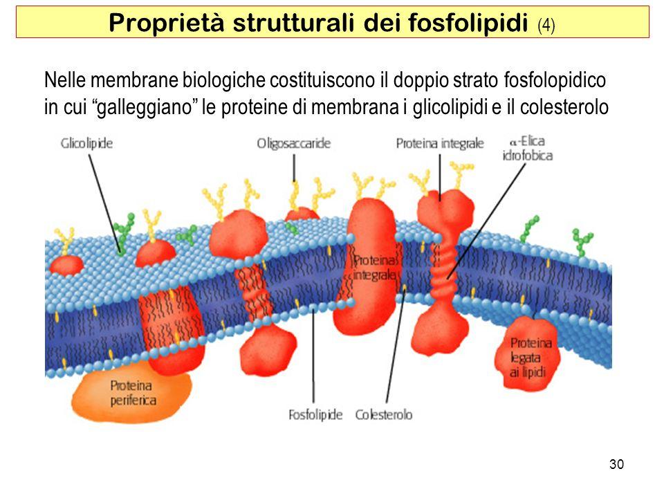 Proprietà strutturali dei fosfolipidi (4)