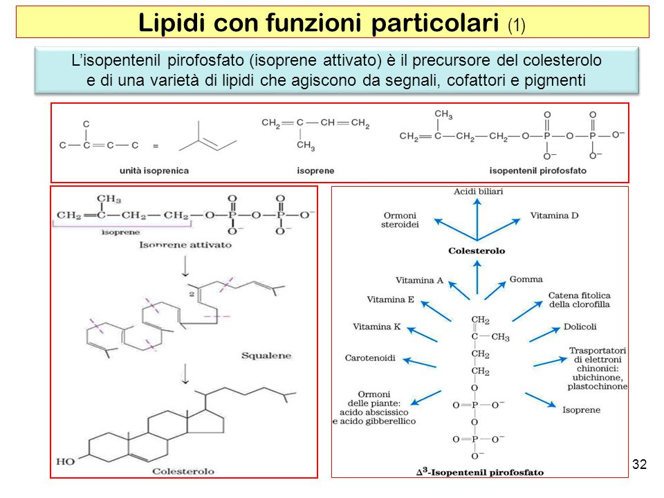 Lipidi con funzioni particolari (1)