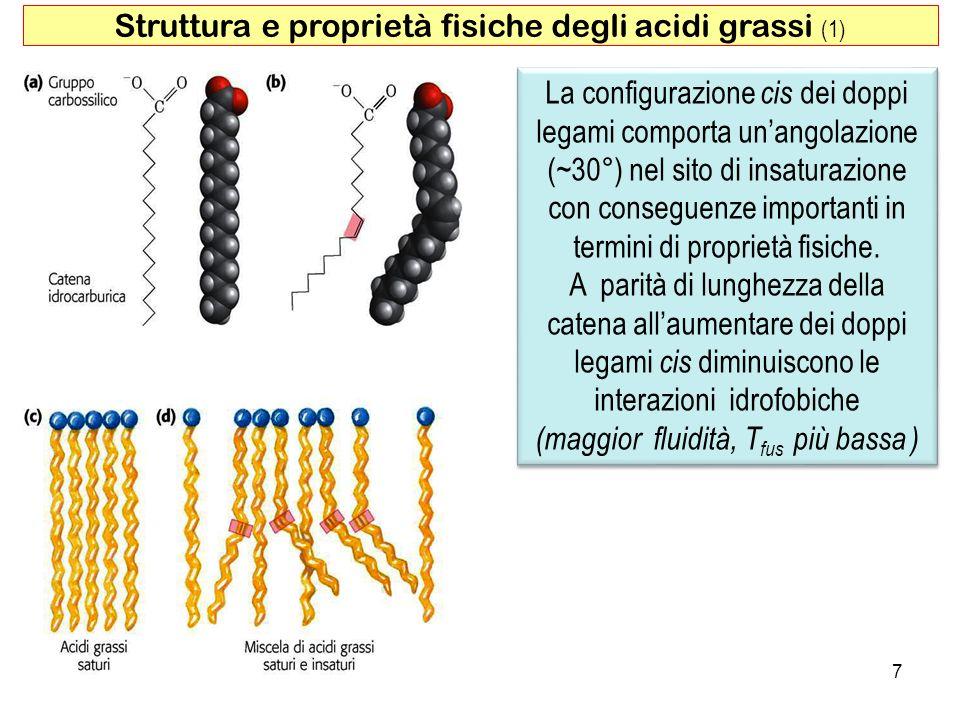 Struttura e proprietà fisiche degli acidi grassi (1)