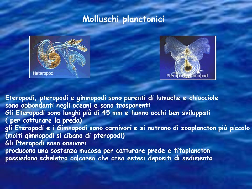 Molluschi planctonici