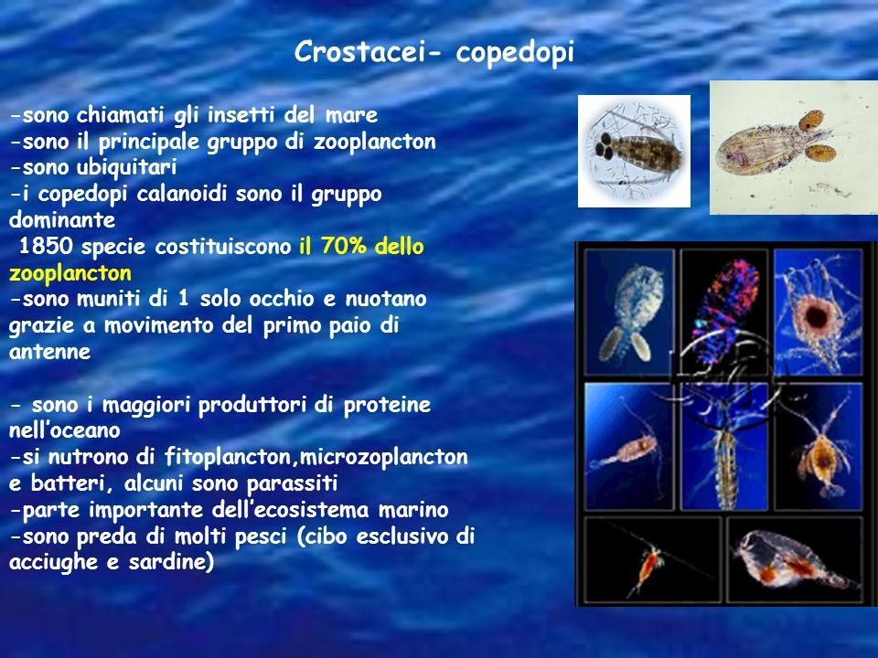 Crostacei- copedopi -sono chiamati gli insetti del mare