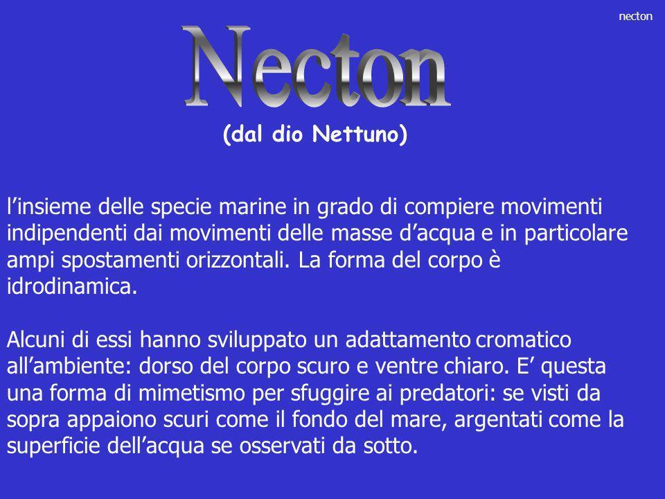 Necton (dal dio Nettuno)