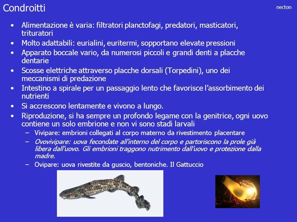 Condroitti Alimentazione è varia: filtratori planctofagi, predatori, masticatori, trituratori.