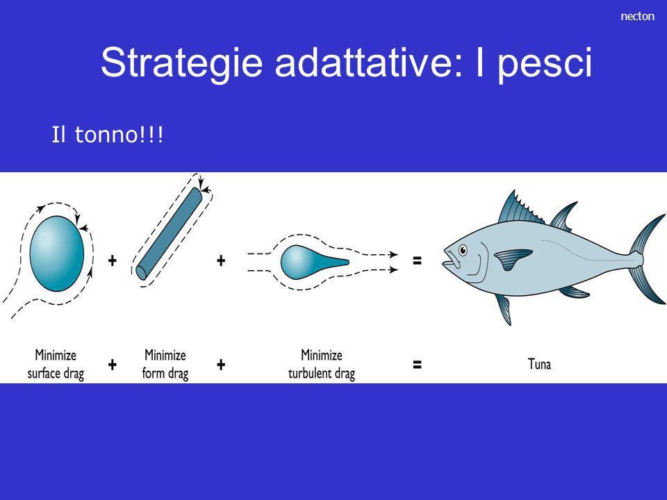 Strategie adattative: I pesci