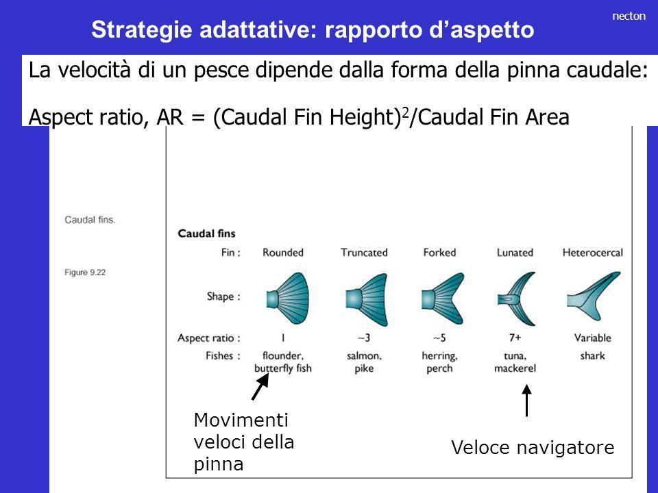 Strategie adattative: rapporto d'aspetto
