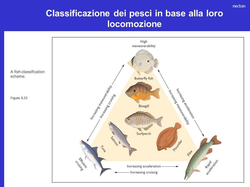Classificazione dei pesci in base alla loro locomozione