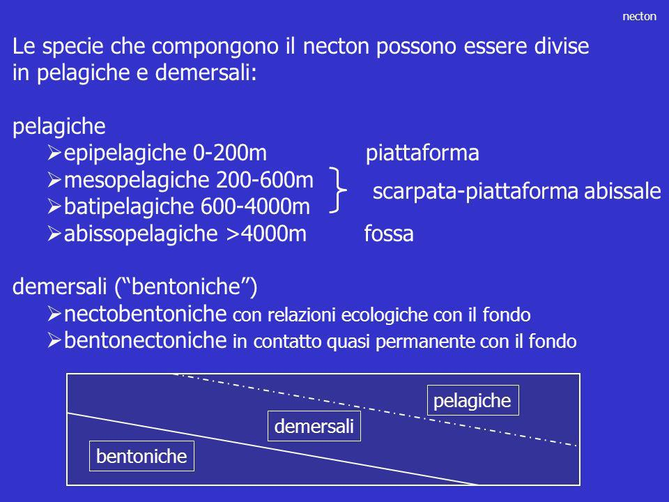 epipelagiche 0-200m piattaforma mesopelagiche 200-600m
