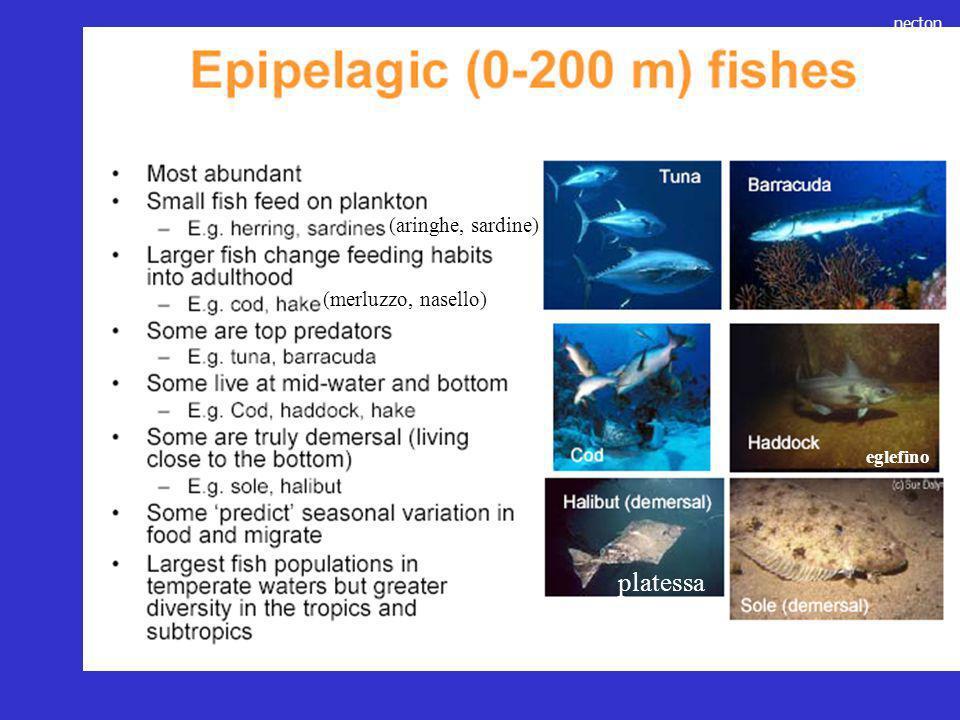 platessa (aringhe, sardine) (merluzzo, nasello) eglefino