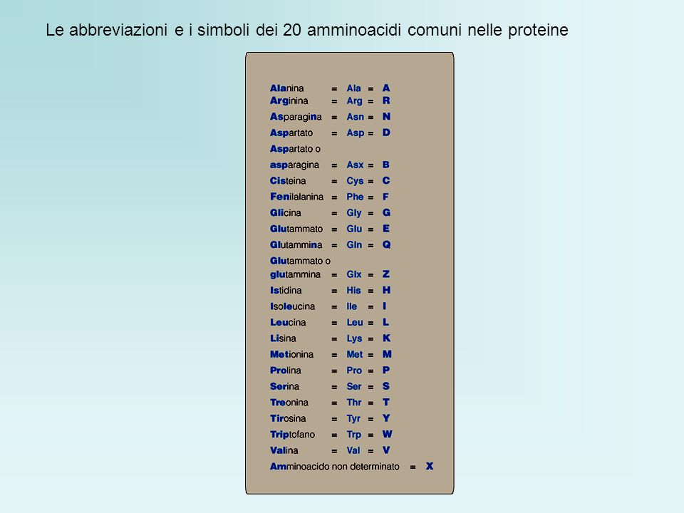 Le abbreviazioni e i simboli dei 20 amminoacidi comuni nelle proteine
