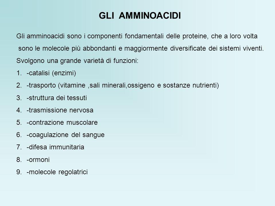 GLI AMMINOACIDI Gli amminoacidi sono i componenti fondamentali delle proteine, che a loro volta.