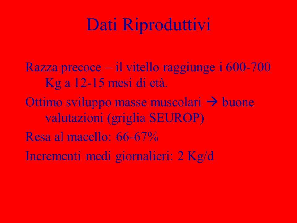 Dati Riproduttivi Razza precoce – il vitello raggiunge i 600-700 Kg a 12-15 mesi di età.