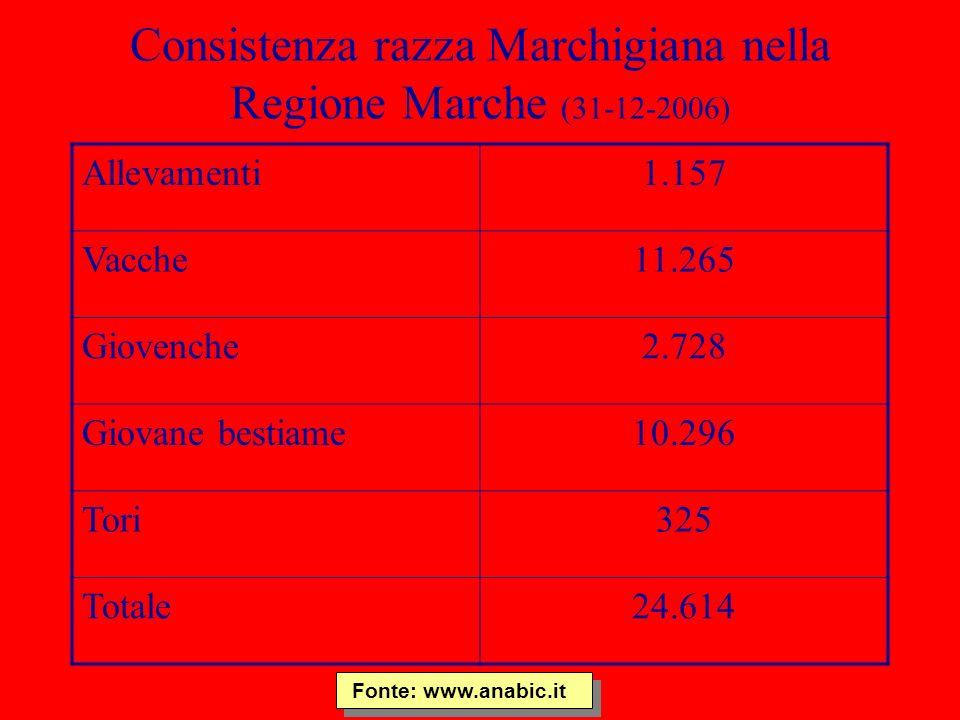 Consistenza razza Marchigiana nella Regione Marche (31-12-2006)