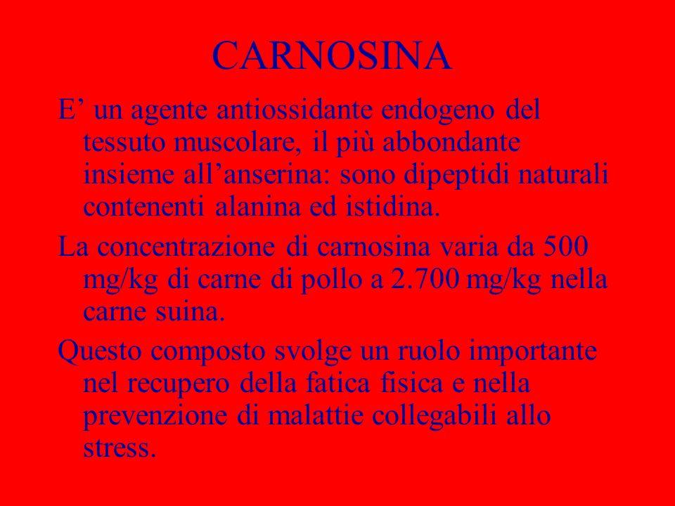 CARNOSINA