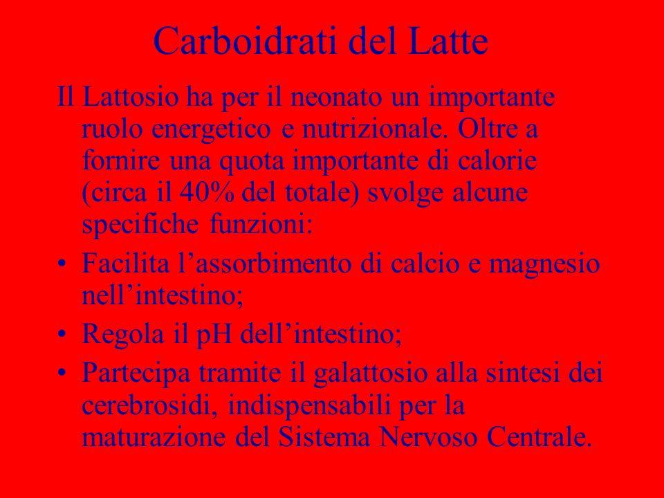 Carboidrati del Latte