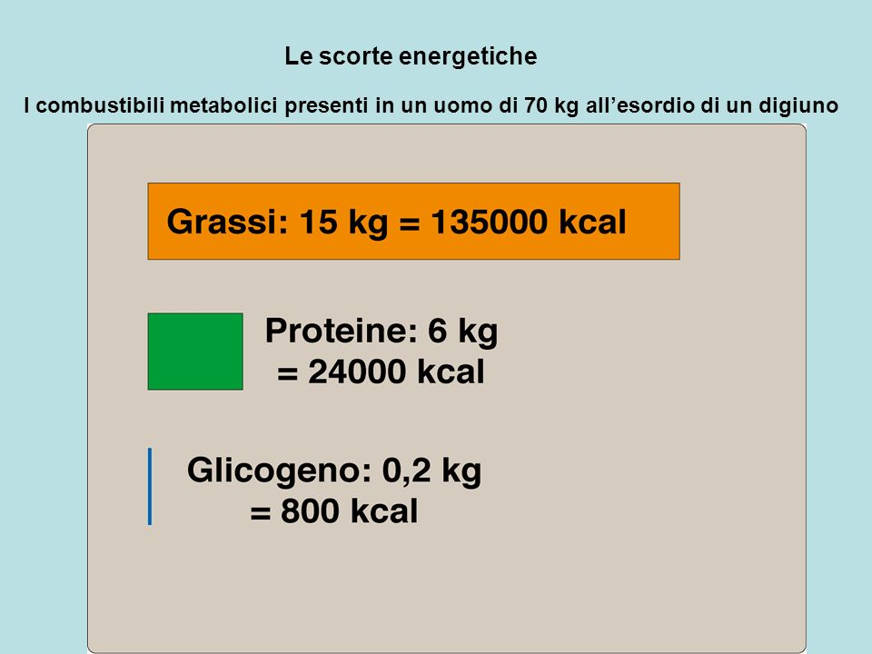 Le scorte energetiche I combustibili metabolici presenti in un uomo di 70 kg all'esordio di un digiuno.