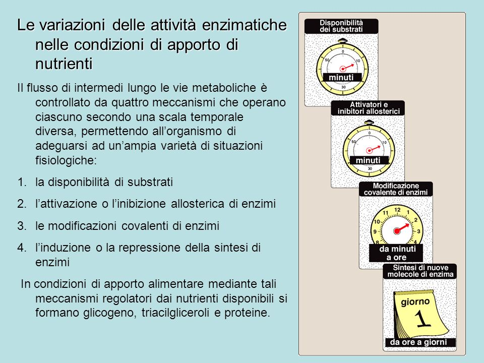 Le variazioni delle attività enzimatiche nelle condizioni di apporto di nutrienti