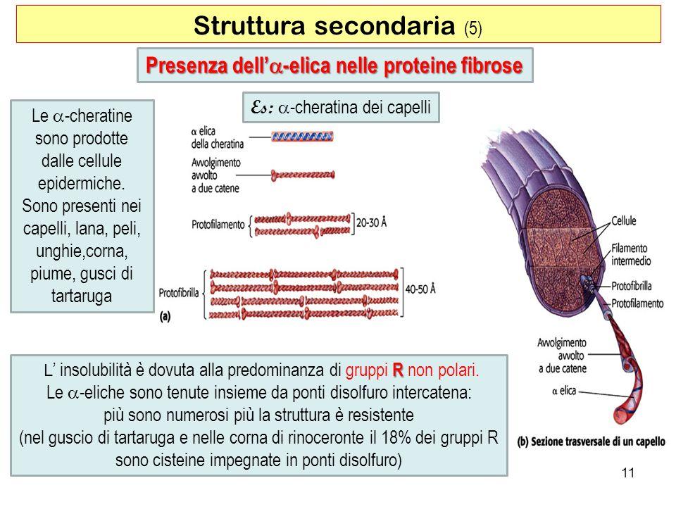 Presenza dell'a-elica nelle proteine fibrose