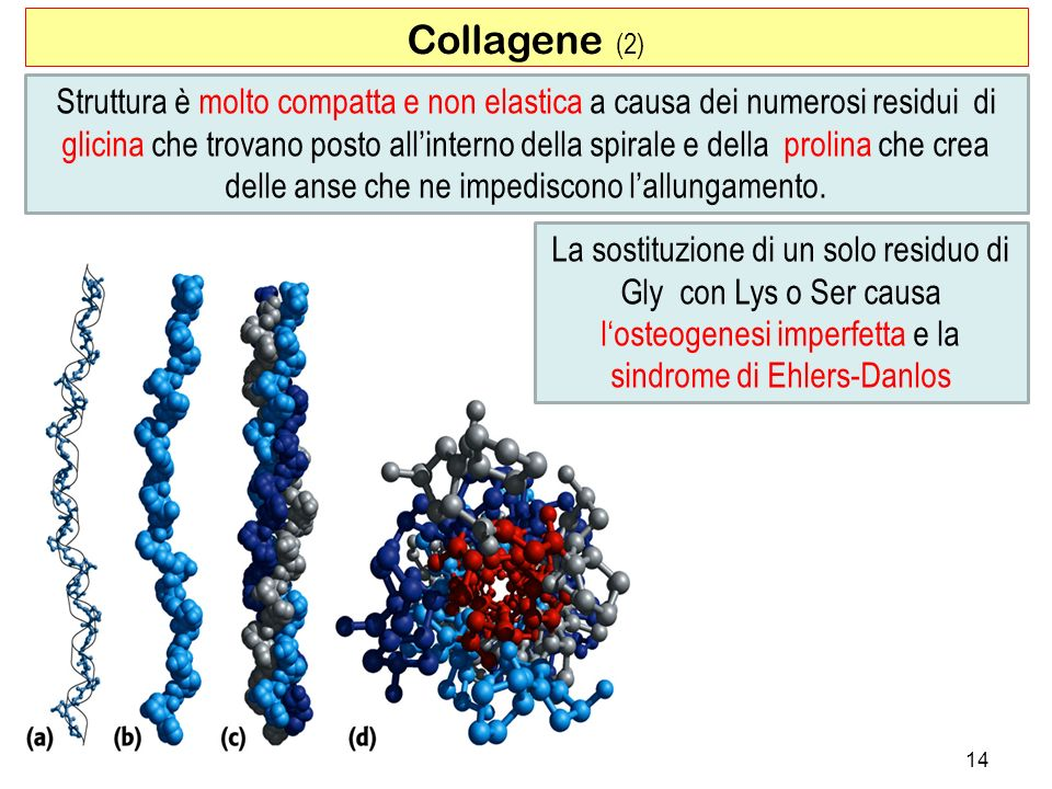 Collagene (2)