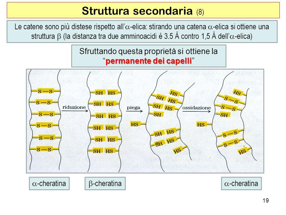 Struttura secondaria (8)