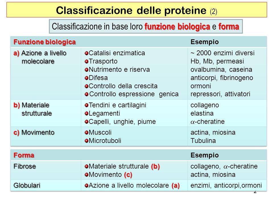 Classificazione delle proteine (2)