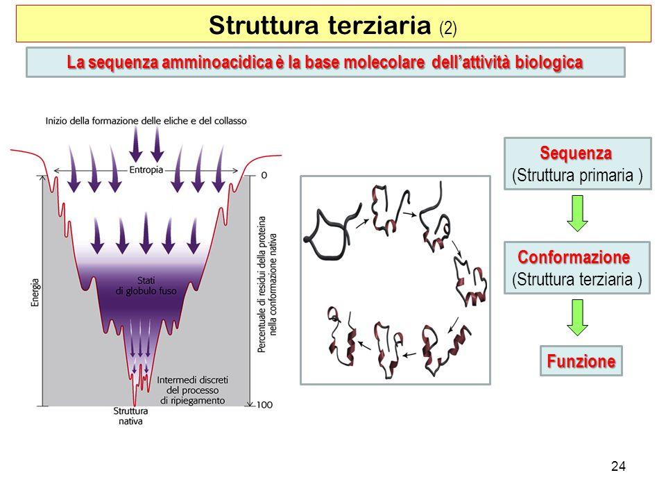 La sequenza amminoacidica è la base molecolare dell'attività biologica